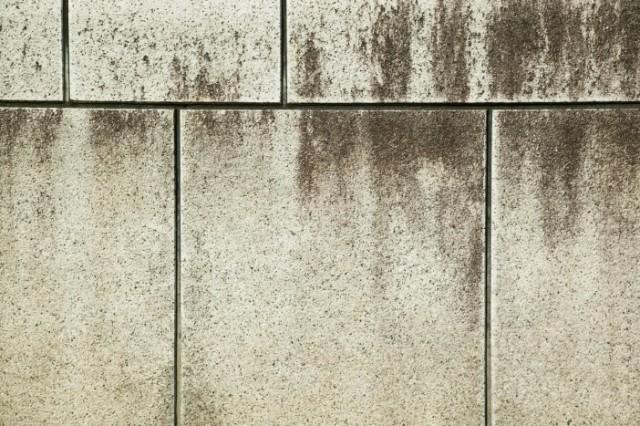 〈外壁〉カビ・藻